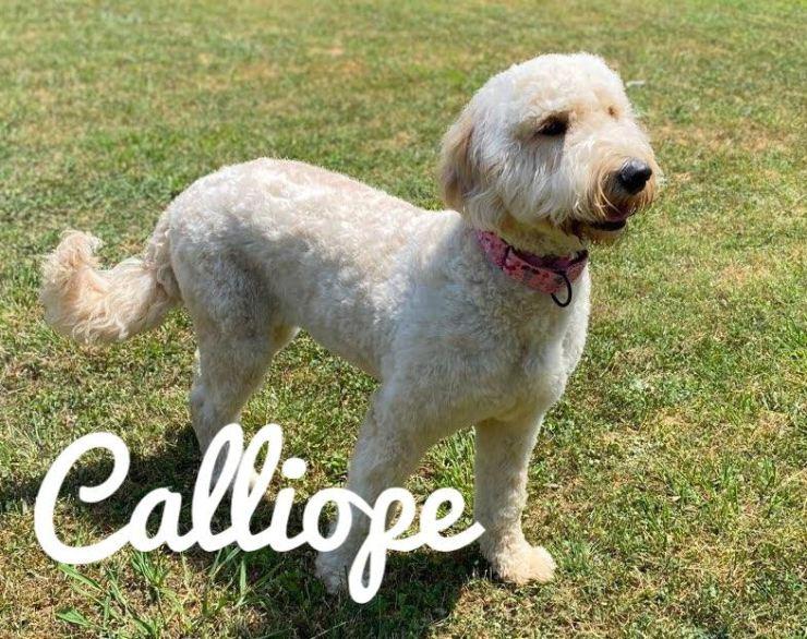 Calliope2
